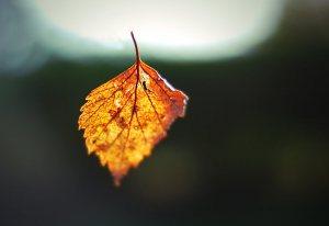 falling leaf by eiran04